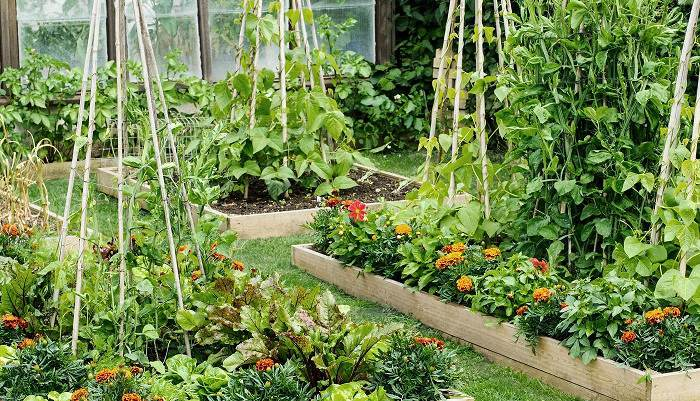 10 Smart Ways to Create an Eco-Friendly Garden